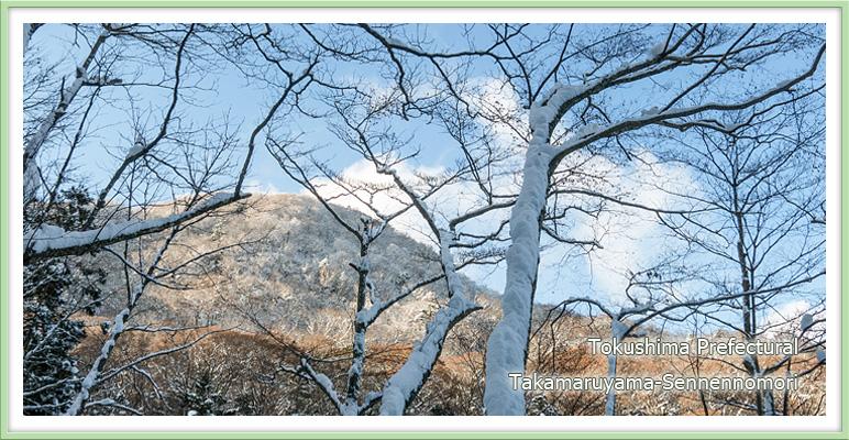 新雪の高丸山