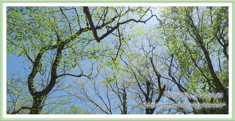 新緑の広葉樹